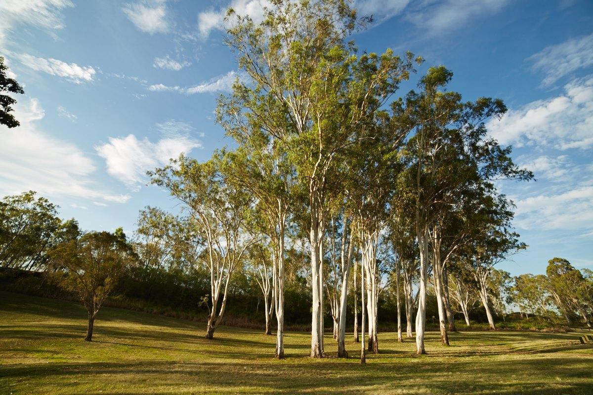 australien-25, park, baum, wiese, landschaft