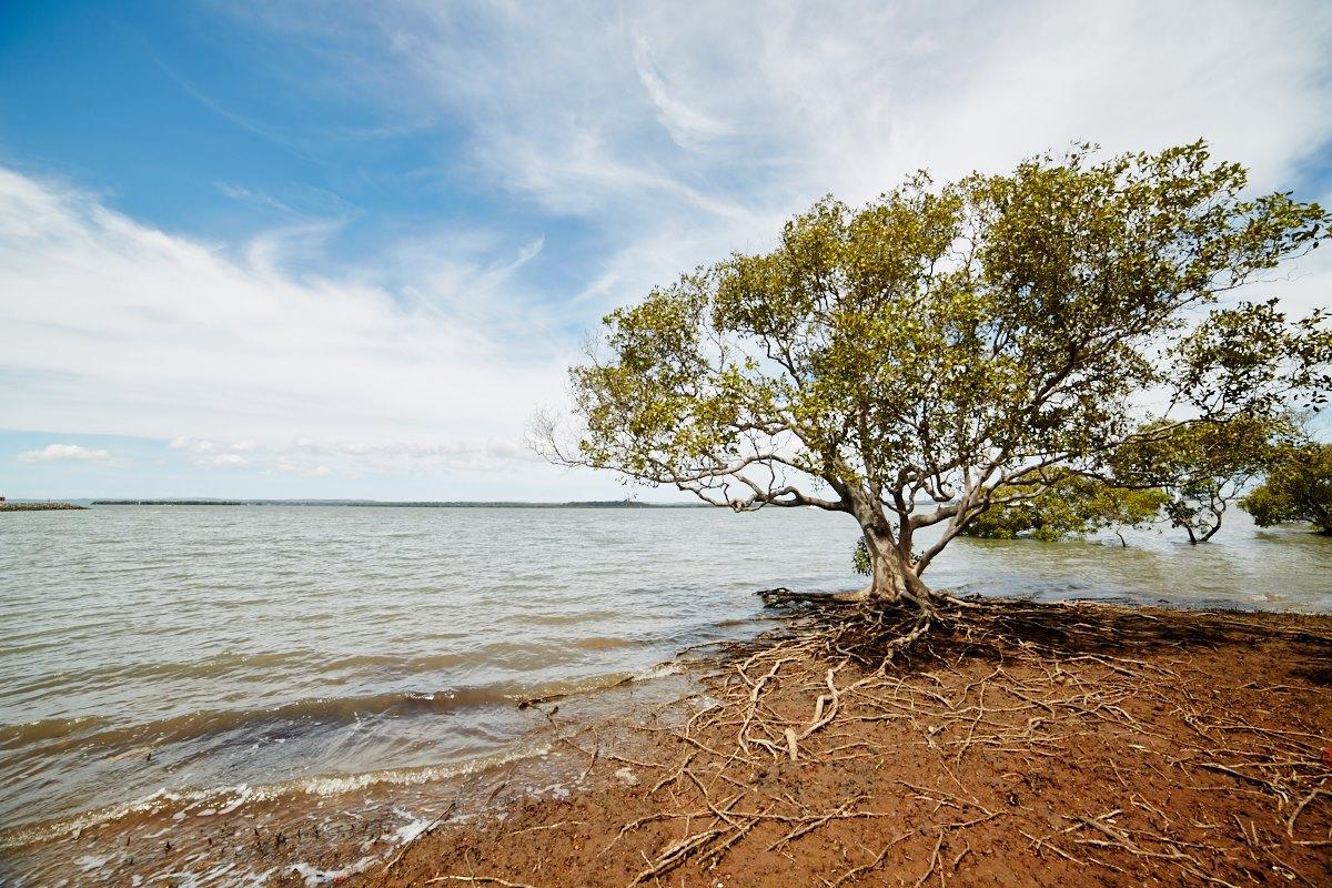 australien-3, meer, baum, wurzeln, himmel